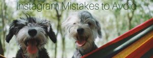 Dethrone the Dog Photo   Instagram Mistakes to Avoid